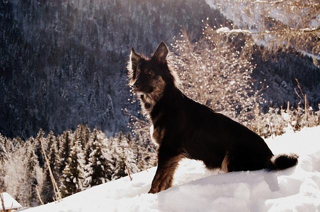 pas-sneg-planina