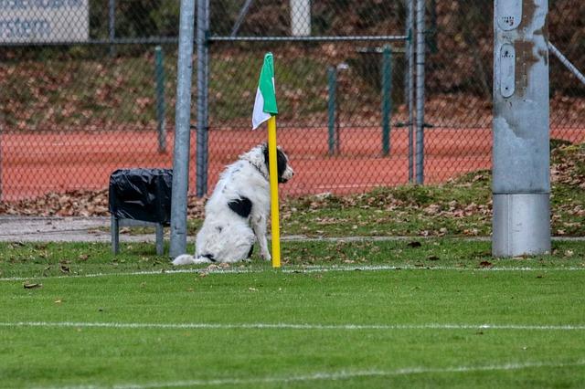 pas-fudbal