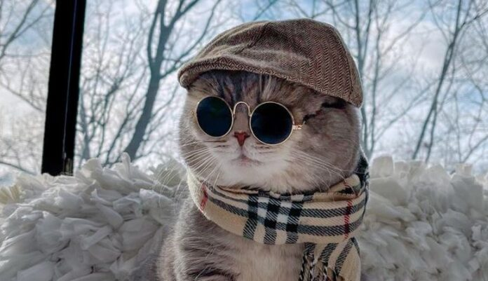 benson-mačka-instagram