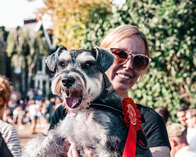 karneval-za-pse-izložba-pasa