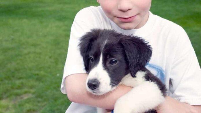 dirljiva-priča-iz-španije-dečak-pas-štene-kuče