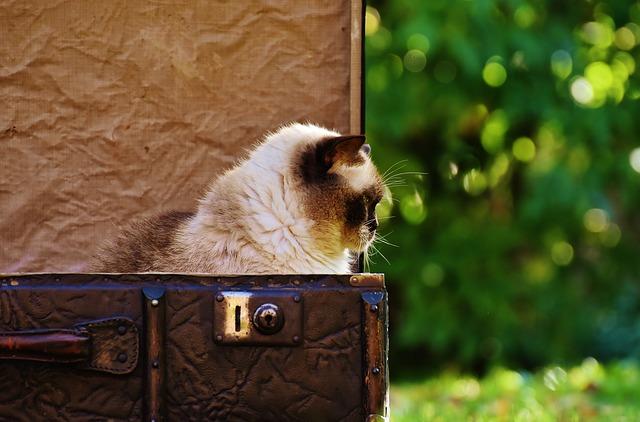maca-mačka-kofer-putovanje-najstarija-mačka