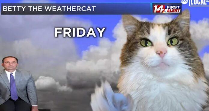 mačka-beti-najslađi-meteorolog