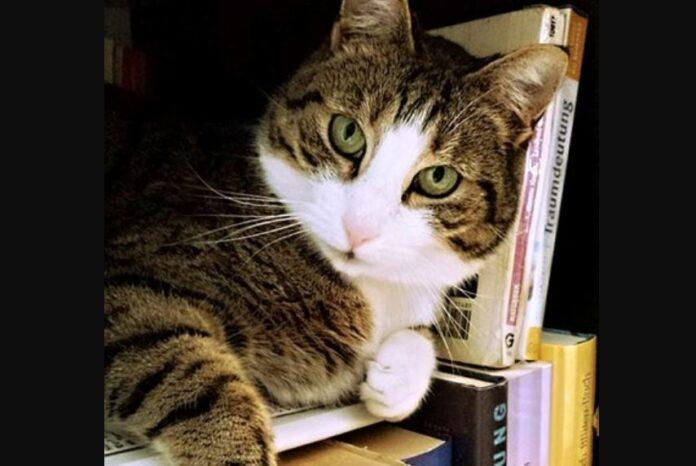 mačka-biblioteka-knjiga-maca