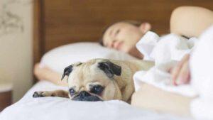 spavanje-sa-psom-u-istom-krevetu-pas-krevet (1)