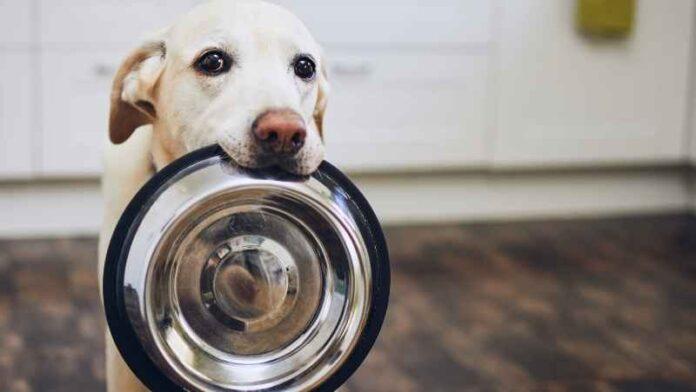 hrana-za-pse-moj-ljubimac (1)